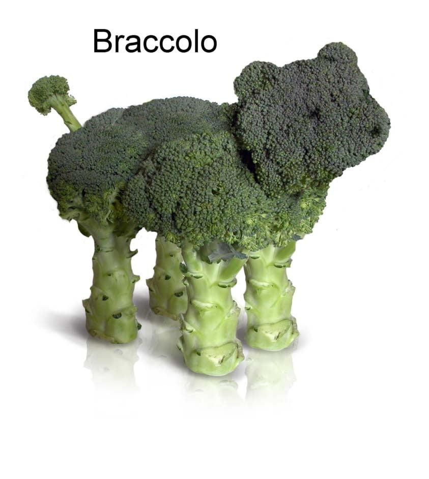 braccolo