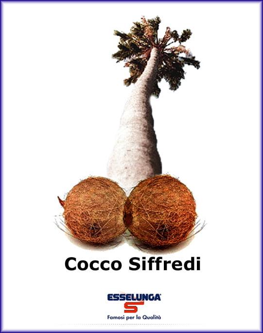 coccosiffredi