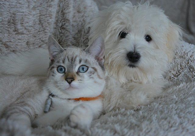 Quali sono gli animali domestici più comuni in Italia